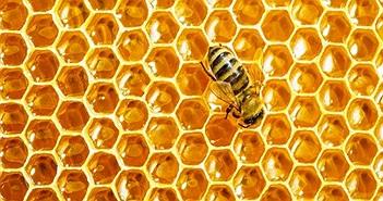 Khám phá thú vị về cách mật ong hình thành