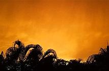 Điều gì gây ra cơn bão cát bụi khổng lồ Godzilla?