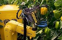 """Kỳ thú xem robot """"nông dân"""" làm việc thay con người trong nhà kính"""