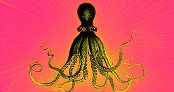 Lý do bạch tuộc được công nhận là sinh vật quái dị nhất hành tinh