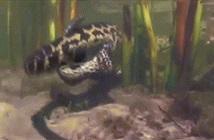 Ảnh động trăn Anaconda, quái vật Nam Mỹ đẻ con đầy kịch tính