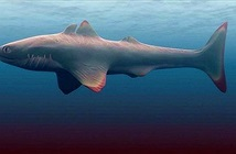 Phát hiện gây sốc về kẻ đầu tiên thống trị đại dương