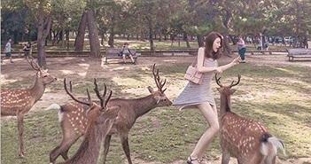 """Cô gái diện váy ngắn cho hươu ăn, con vật bỗng hành động """"sốc""""..."""