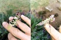 Chết mê bọ ngựa đẹp nhất thế giới, ca ngợi thần thú hoa