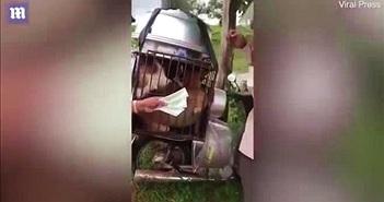 Người đàn ông trả tiền cứu 9 chú chó thoát khỏi cảnh bị mổ thịt