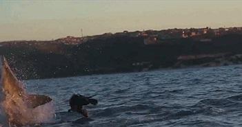 Ly kỳ cảnh hải cẩu vọt khỏi miệng cá mập trắng lớn