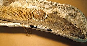 Rệp cây mắc kẹt trong hàm khủng long 75 triệu năm
