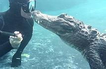 Nụ hôn sốc khi thợ lặn chạm trán cá sấu khổng lồ