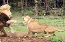 Nghi chồng ngoại tình, sư tử cái điên cuồng đánh đập chồng