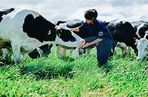 Sữa hữu cơ, sữa organic là gì?