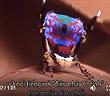 Video: Phát hiện 7 loài nhện chim công mới