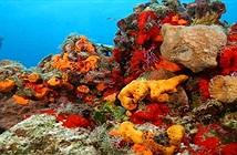 Động vật biển bảo vệ Trái đất khỏi hàng triệu virus