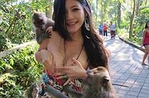 Tiết lộ sốc lý do Ấn Độ dùng thuốc tránh thai cho khỉ