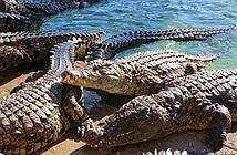 Con rơi xuống bể nhung nhúc cá sấu, bố mẹ trả giá cực đắt