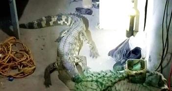 Video: Kinh hãi cá sấu sở thú trốn vào ký túc xá ở Trung Quốc