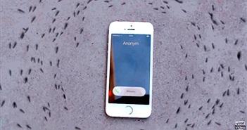 """Hiện tượng gì khiến iPhone """"điều khiển"""" được đàn kiến?"""