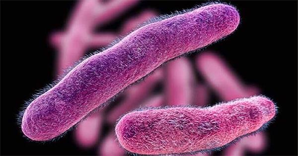 7 loại vi khuẩn phổ biến gây ngộ độc