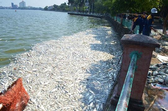 Cá chết trắng hồ Tây: Đừng đổ cho tự nhiên