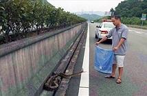 Bò ngang đường bị xe cán, trăn khổng lồ còn hung hăng làm điều này