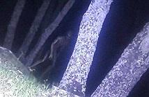 Máy ảnh nhiệt phát hiện người ngoài hành tinh trong rừng?