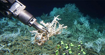 Các nhà khoa học mới tìm ra một rạn san hô khổng lồ lẩn khuất dưới đáy đại dương