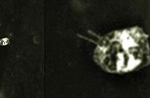 Vật thể lạ hình bọ dị dạng chao lượn trên Mặt trăng