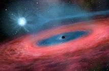 Sự thật sốc:Lỗ đen càng nặng càng điên cuồng, ăn ngấu nghiến