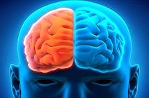 Sự khác nhau giữa những người dùng bán cầu não trái và phải