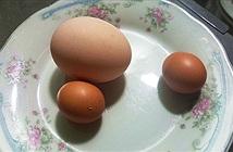Kỳ lạ gà trống đẻ trứng ngày cận Tết