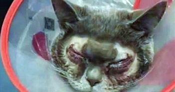 Người phụ nữ bỏ 35 triệu đồng phẫu thuật mắt hai mí cho mèo