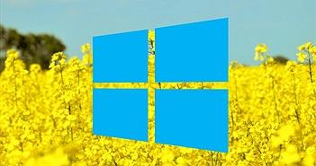 Microsoft xác nhận sắp có bản vá lỗi treo hệ thống trên Windows 10 April 2018 Update