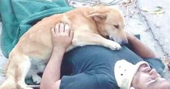 Những câu chuyện về loài chó khiến người xem bật khóc