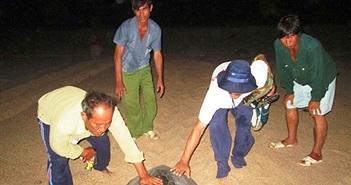 Rùa biển 'nín đẻ' do nắng hạn ở Ninh Thuận