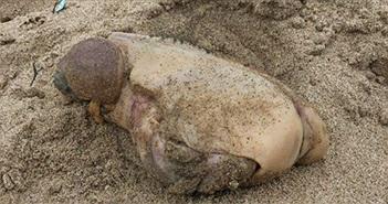 Phát hiện sinh vật biển có hình dạng vô cùng kỳ lạ và đáng sợ