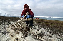 Sốc: Hàng trăm thú cưng của ông già Noel chết thảm