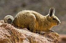 Những loài sinh sản vội vã nhất trong thế giới động vật