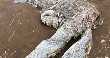 """""""Quái vật"""" khổng lồ trôi dạt lên bãi biển, dân làng hoảng loạn tháo chạy"""