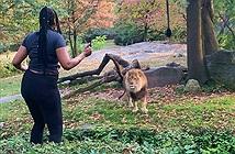 Run người xem cô gái vào chuồng nhảy điên cuồng đe sư tử