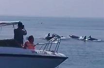 Sửng sốt đàn cá heo trăm con xuất hiện trên biển Hội An