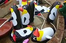 """Bán vé giá """"cắt cổ"""", sở thú cho khách xem chim cánh cụt...bơm hơi"""