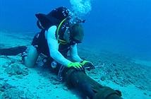VNPT bị thiệt hại lớn nhất do đứt cáp quang biển AAG