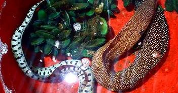 Trăn 2 đầu, cá quái vật... kỳ dị vô cùng trên đất Việt