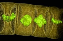 Phát hiện hóa thạch thực vật lâu đời nhất thế giới