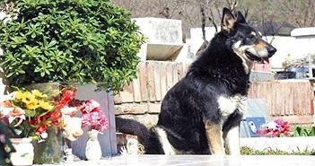 Ngưỡng mộ chuyện cảm động về 5 chú chó trung thành