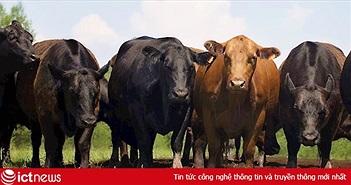 Hãng thương mại điện tử Trung Quốc JD.com sẽ áp dụng nền tảng Blockchain để theo dõi nguồn gốc thịt bò nhập khẩu