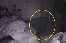 Đang ngủ ngửi mùi lạ, tỉnh dậy phát hiện con vật hãi hùng
