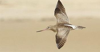 Top 10 loài chim bay cao nhất thế giới