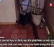 Video: Trăn gấm mò vào nhà dân bắt trộm mèo