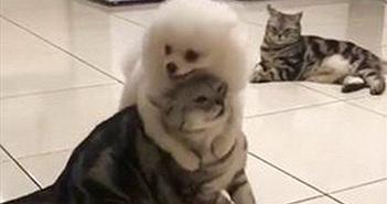 """Bị mèo """"bạo hành"""" hội đồng, chó cưng vẫn cứ hở ra là ôm"""