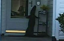 Cá sấu vươn người cố bấm chuông cửa đòi vào nhà dân